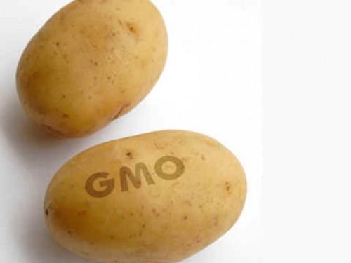 ЛДПР требует повысить ответственность за ГМО
