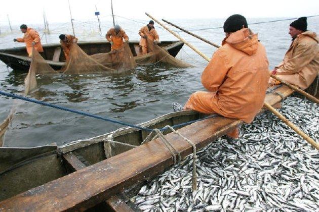 рыболовное хозяйство калининградская область