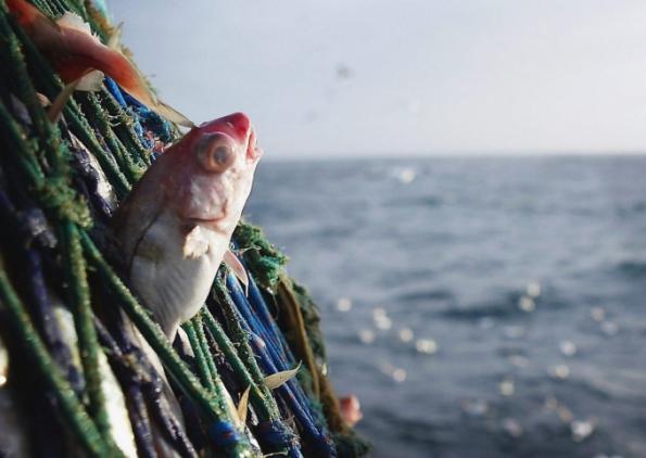 разрешение на выход в море на рыбалку