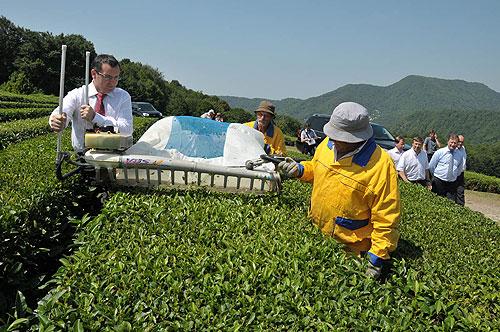6 первая чайная плантация краснодарского чая была раположена в районе села солохаул (сочи) в 1901 году